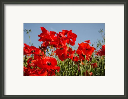Poppy Field 3 Framed Print By John Adams