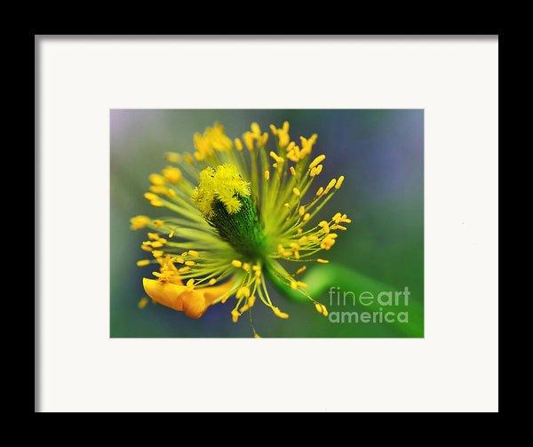 Poppy Seed Capsule 2 Framed Print By Kaye Menner