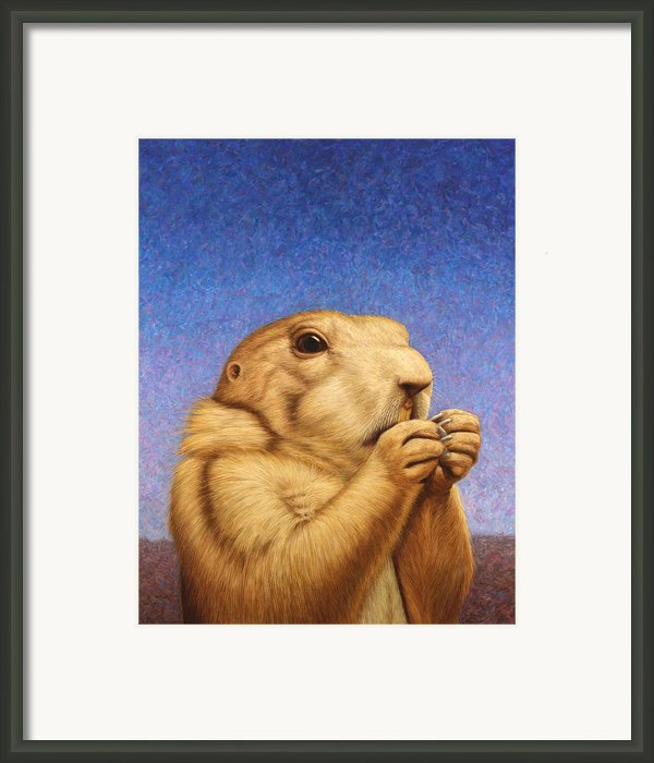 Prairie Dog Framed Print By James W Johnson