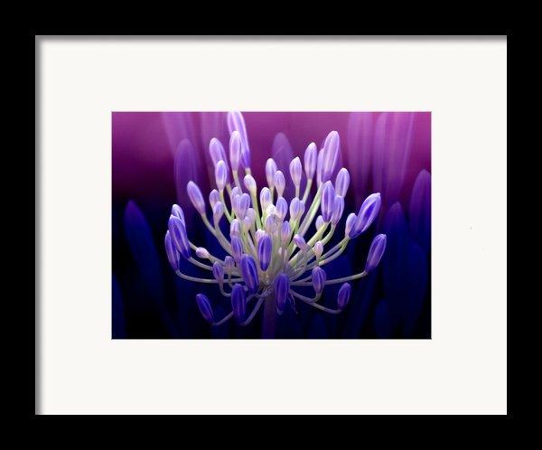 Praise Framed Print By Holly Kempe