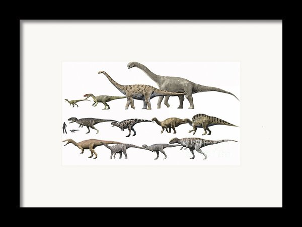 Prehistoric Era Dinosaurs Of Niger Framed Print By Nobumichi Tamura
