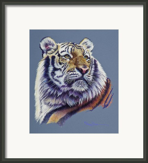 Pretty Boy Siberian Tiger Framed Print By Mary Dove