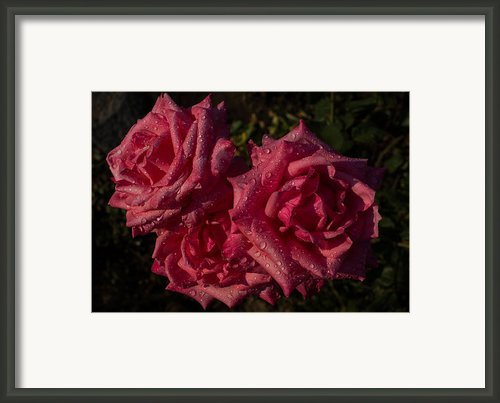 Pretty In Pink Framed Print By Georgia Mizuleva