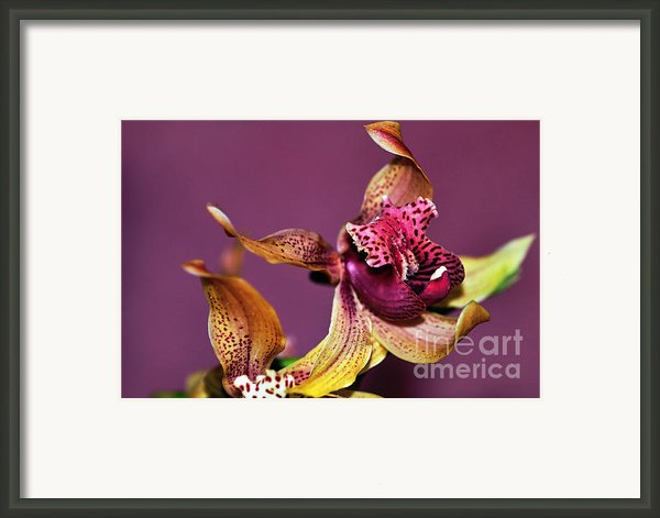 Pretty Orchid On Pink Framed Print By Kaye Menner