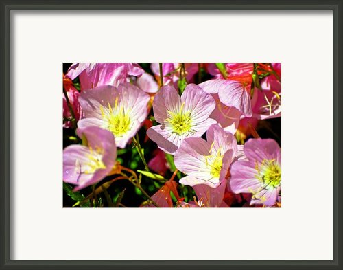 Pretty Purple Framed Print By Marty Koch