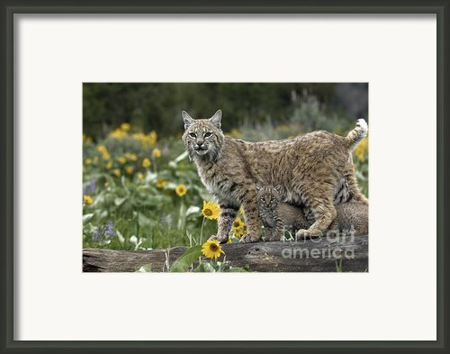 Protection Framed Print By Robert Weiman