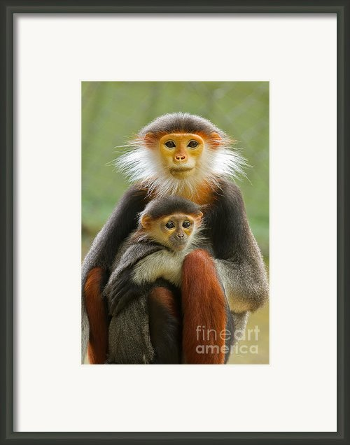 Protective Custody Framed Print By Ashley Vincent