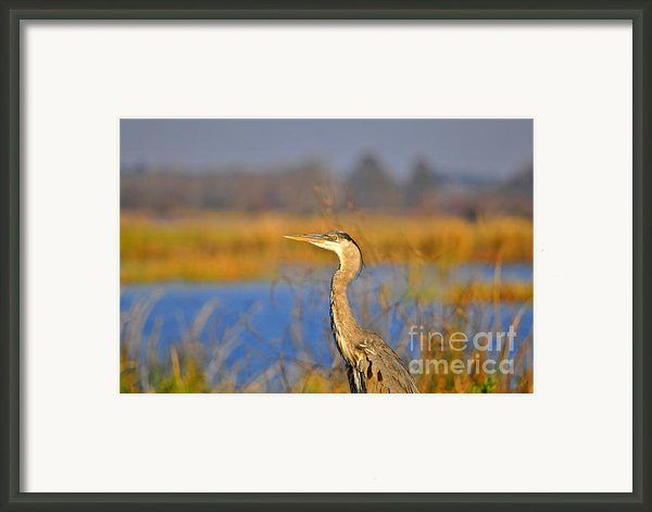 Proud Profile Framed Print By Al Powell Photography