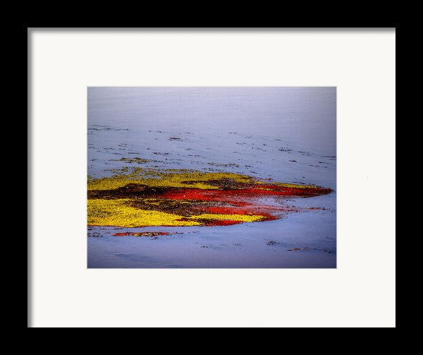 Psychedelic Algae  Framed Print By Thomas Young