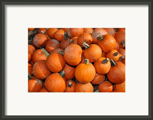 Pumpkins Framed Print By Diane Lent