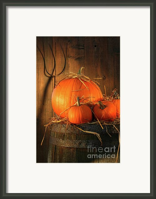 Pumpkins On Wine Barrel  Framed Print By Sandra Cunningham