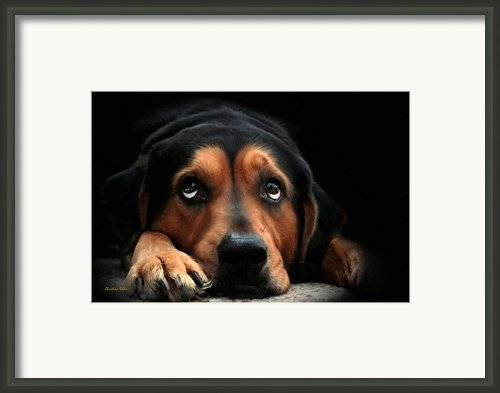Puppy Dog Eyes Framed Print By Christina Rollo