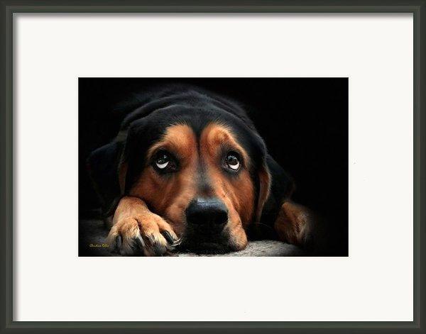 Puppy Dog Eyes Framed Print By Christina Rollo