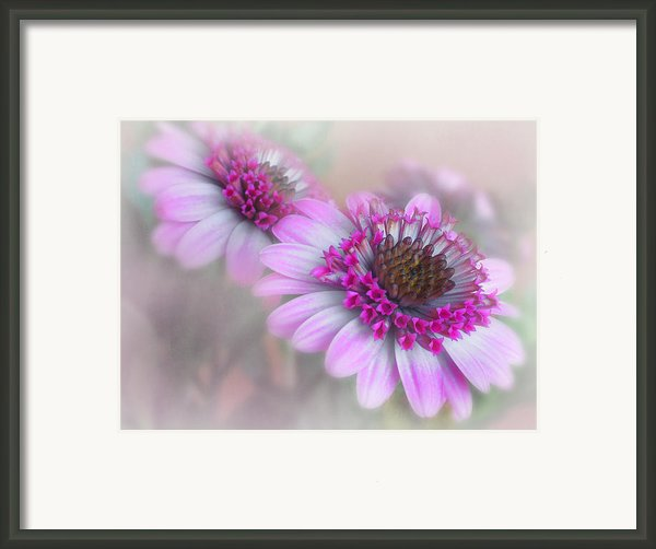 Purple Blooms Framed Print By David And Carol Kelly