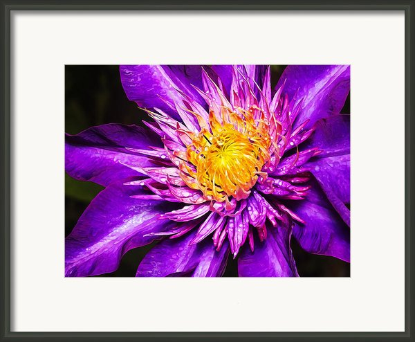 Purple Clematis Flower Framed Print By Bill Caldwell -        Abeautifulsky Photography