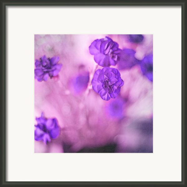 Purple Flowers Framed Print By Marisa Horn