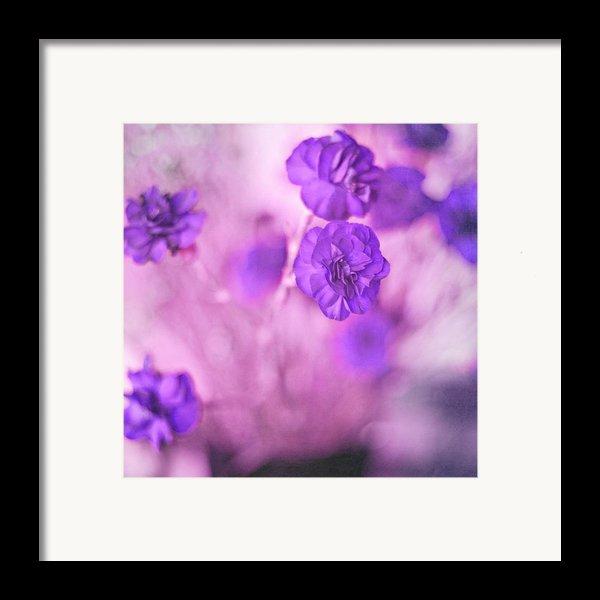 Purple Flowers Framed Print By Marisa Horn