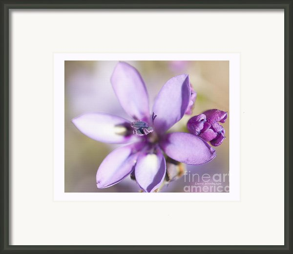 Purple Geranium 2 Framed Print By Artist And Photographer Laura Wrede