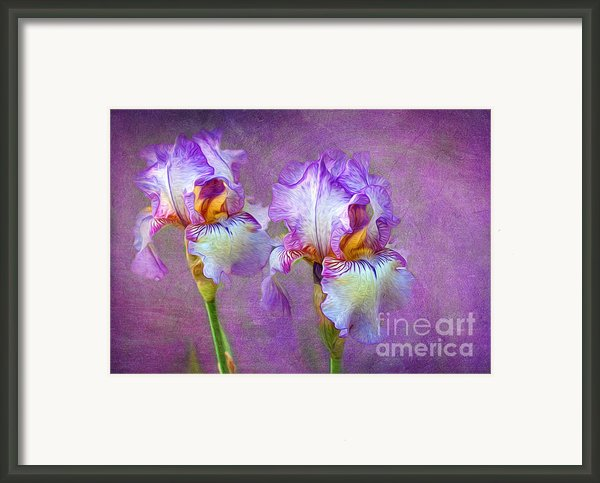 Purple Iris Framed Print By Lena Auxier