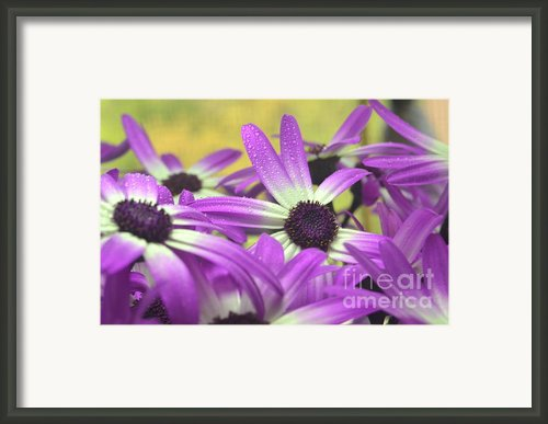 Purple Senetti Iii Framed Print By Cate Schafer