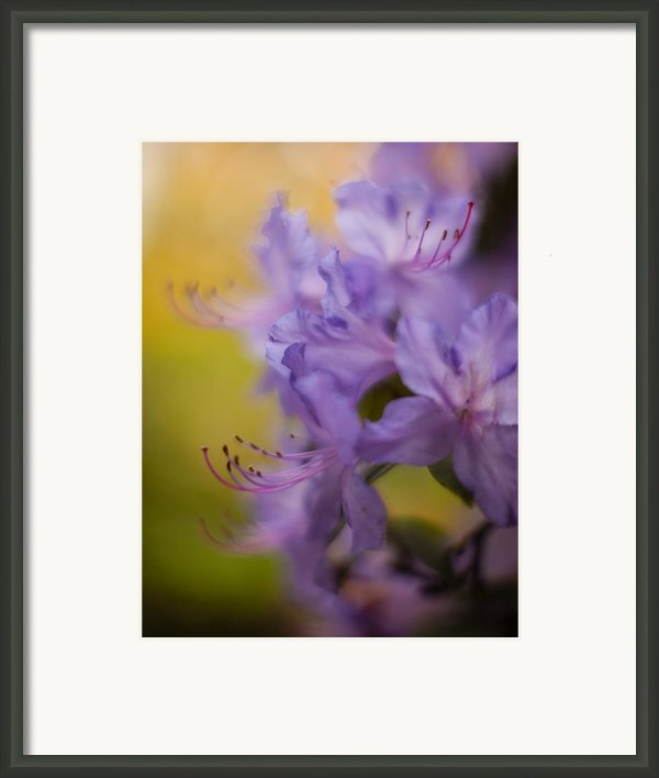 Purple Whispers Framed Print By Mike Reid