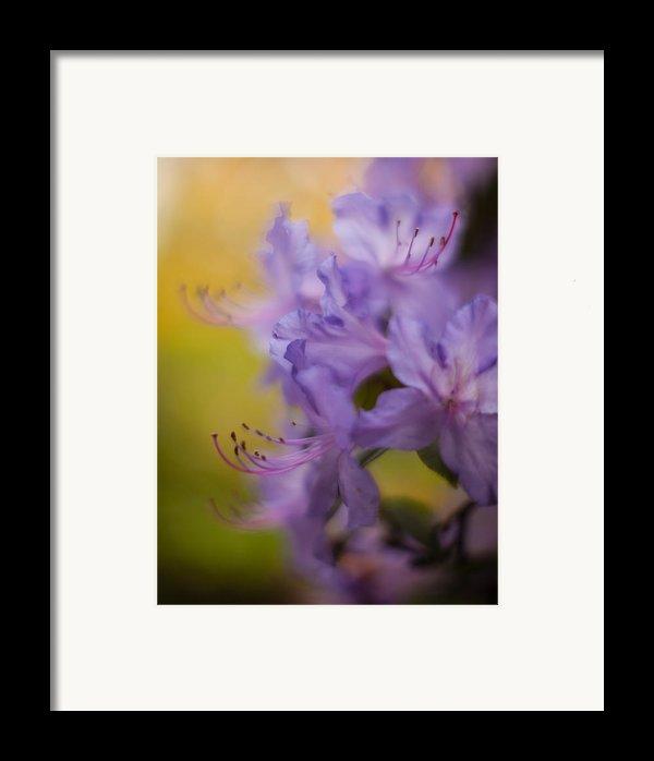 Purple Whispers Framed Print By Mike Reid
