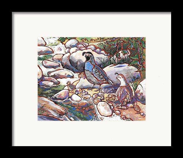 Quail Family Framed Print By Nadi Spencer