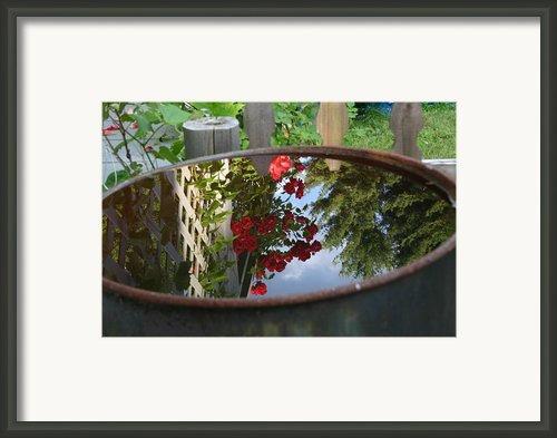Rain Barrel Framed Print By Carla  Kutt