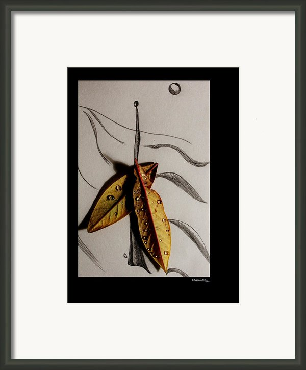 Rain Catcher Framed Print By Xoanxo Cespon
