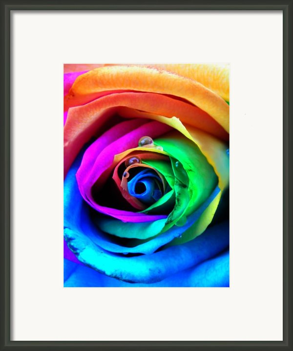 Rainbow Rose Framed Print By Juergen Weiss