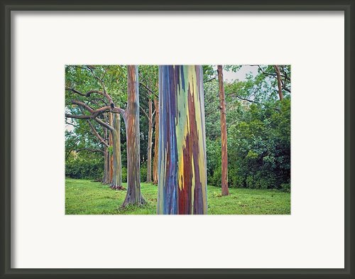 Rainbow Tree Maui Framed Print By M Swiet Productions
