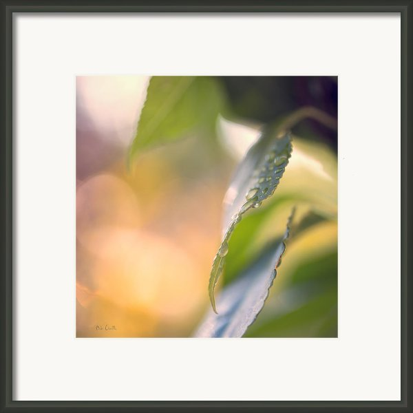 Raindrops Three Framed Print By Bob Orsillo