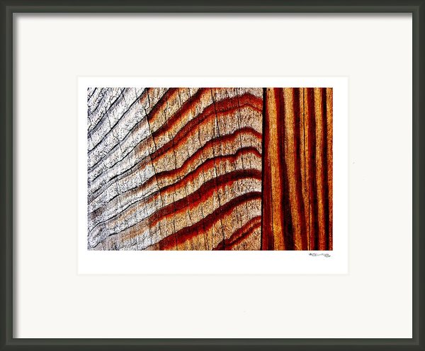 Rainforest Abstract Framed Print By Xoanxo Cespon