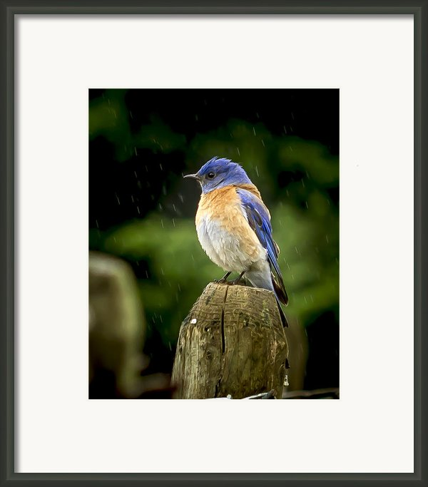 Raining Framed Print By Jean Noren