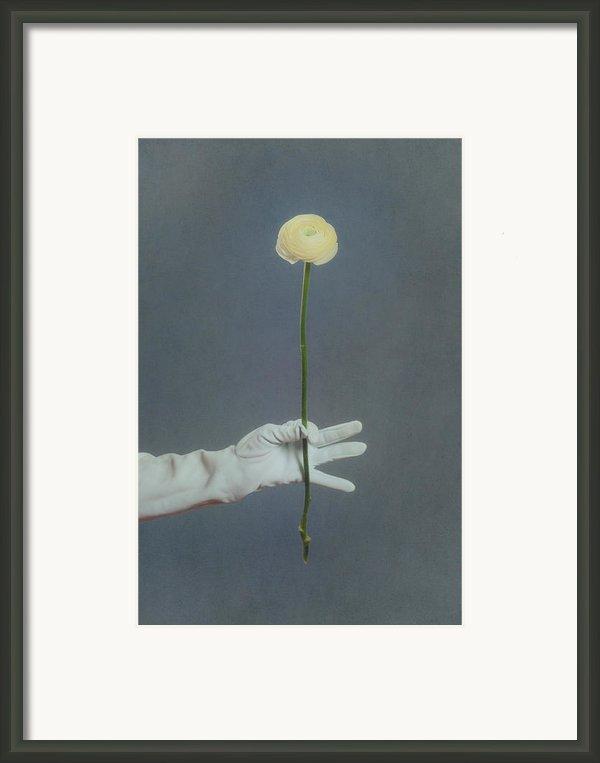 Ranunculus Framed Print By Joana Kruse