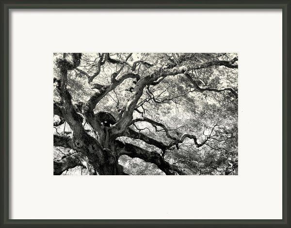 Reaching For Heaven Framed Print By Karen Wiles