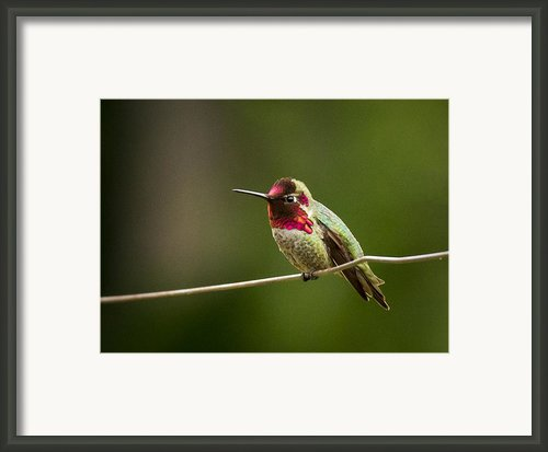 Ready To Zoom Framed Print By Jean Noren