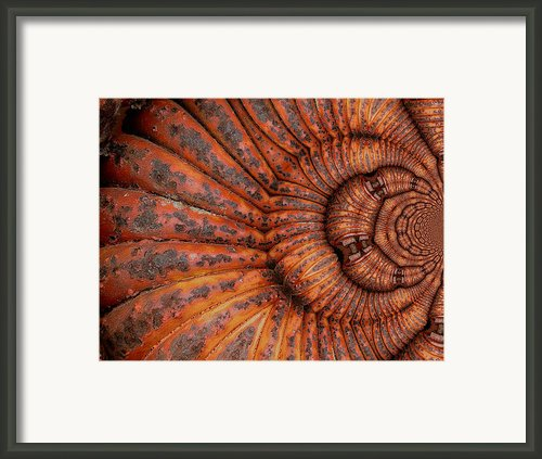 Recoiled 1 Framed Print By Wendy J St Christopher