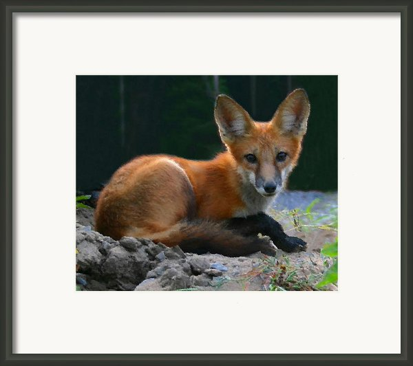 Red Fox Framed Print By Kristin Elmquist
