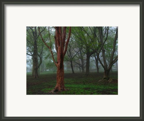 Red Framed Print By Juergen Roth
