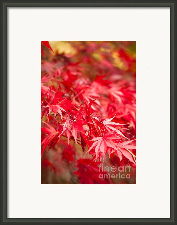 Red Red Red Framed Print By Anne Gilbert