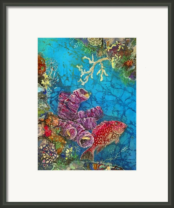 Red Snapper Framed Print By Sue Duda