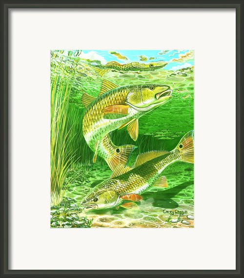 Redfish Haven In0018 Framed Print By Carey Chen