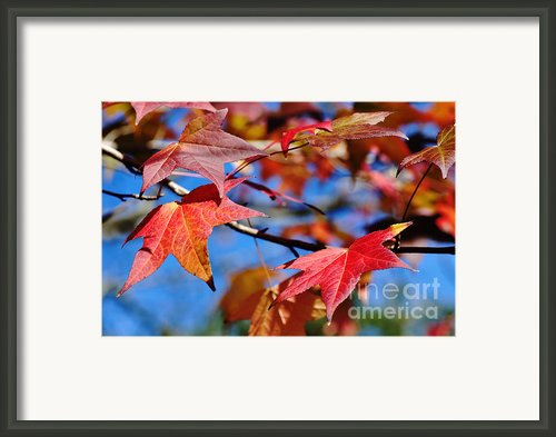 Reds Of Autumn Framed Print By Kaye Menner