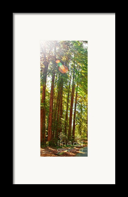 Redwood Wall Mural Panel 1 Framed Print By Artist And Photographer Laura Wrede