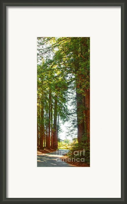 Redwood Wall Mural Panel 2 Framed Print By Author And Photographer Laura Wrede