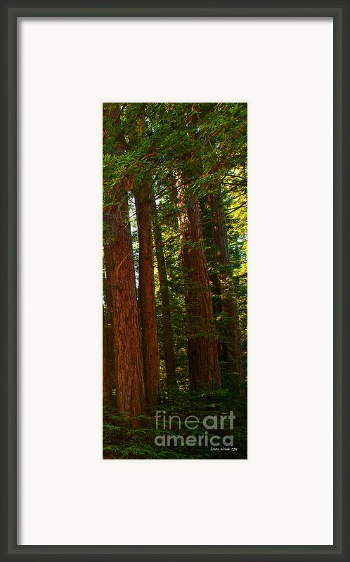 Redwood Wall Mural Panel Three Framed Print By Artist And Photographer Laura Wrede