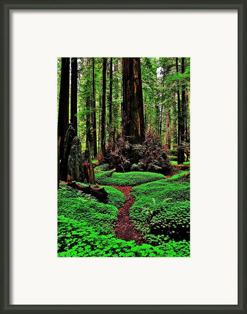 Redwoods Wonderland Framed Print By Benjamin Yeager