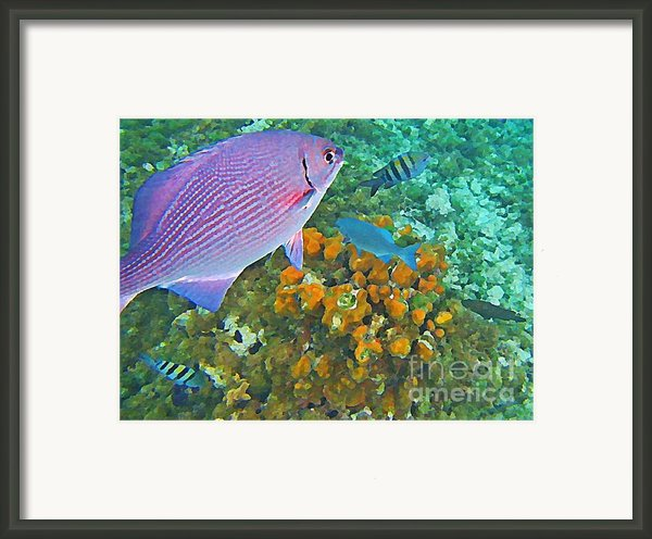 Reef Life Framed Print By John Malone