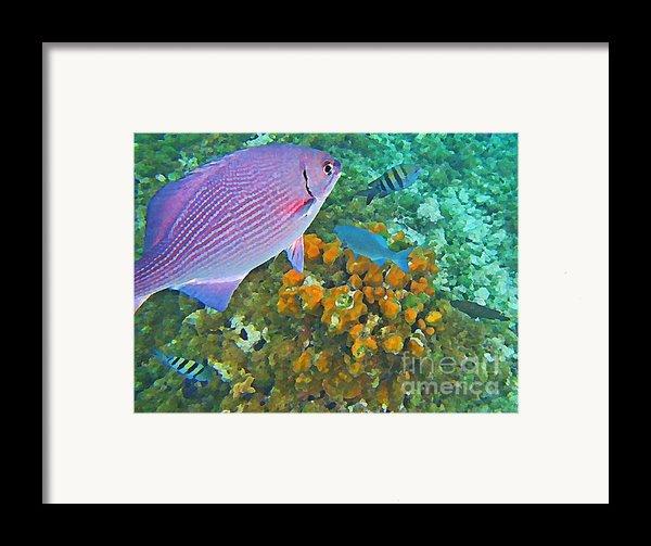 Reef Life Framed Print By John Malone